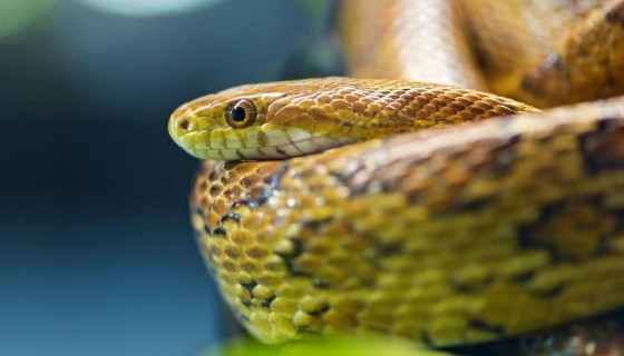 wallpapers green anaconda snak…