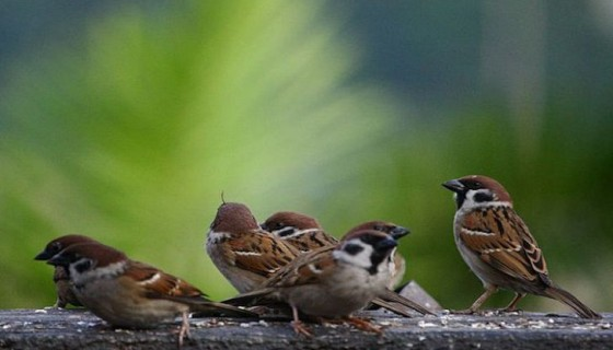 birds world sparrow day photo