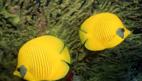 Beautiful Yellow Fish in …