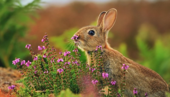 beautiful Animal Rabbit flower…