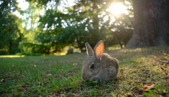 Animal Rabbit in zoo
