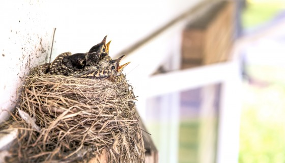 baby animals nests birds 4k wa…