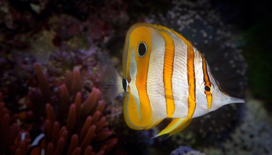 Coral reef fish bright colors …