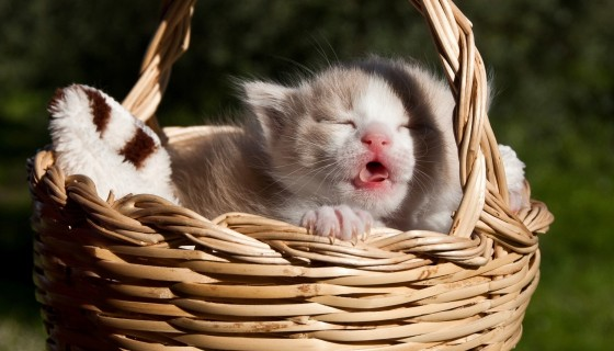 cat in baskets animal hd wallp…