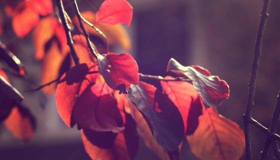 macro leaves fall sunset …