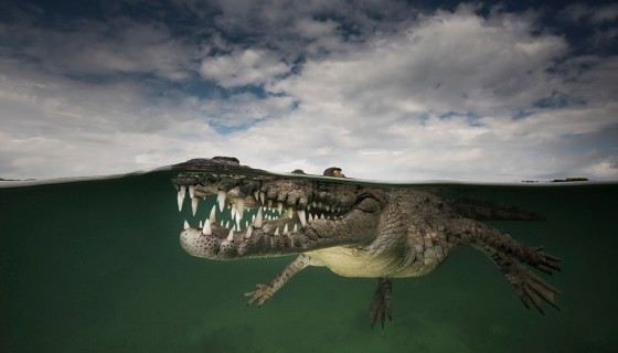 animals underwater reptil…