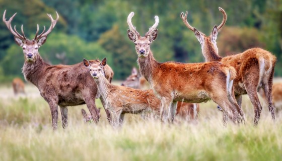 animals nature landscape deer …