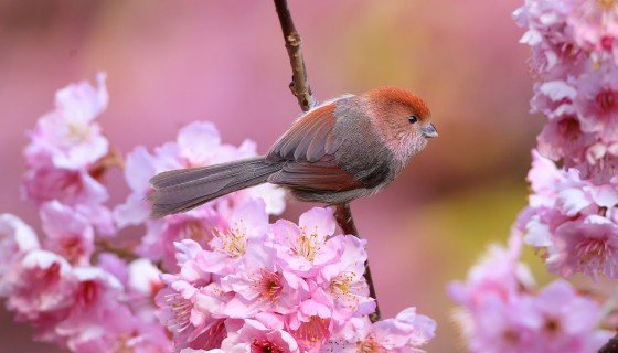 animals birds pink flower…