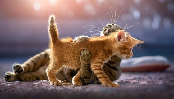 cute kittens cat animal 4k