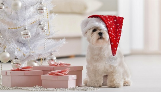 Beautiful puppy merry christma…