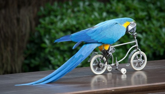 animals mood funny bicycl…
