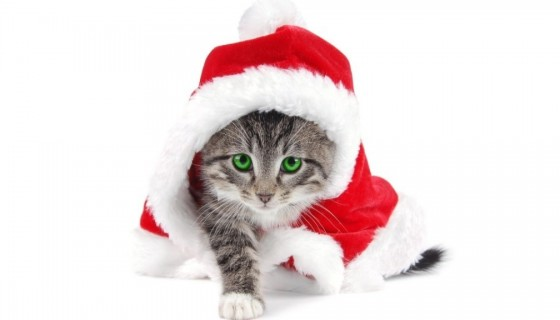 merry Christmas 2017 cute Cat …