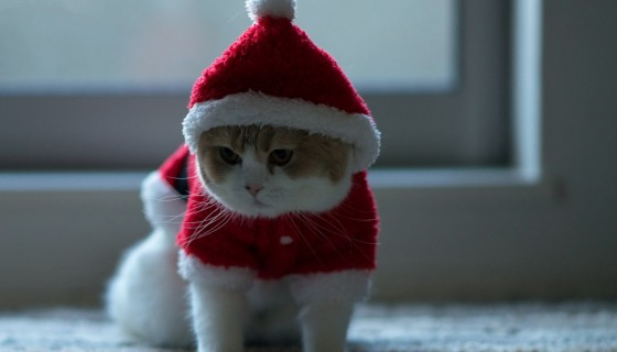 santa claus cat wide 4k wallpa…